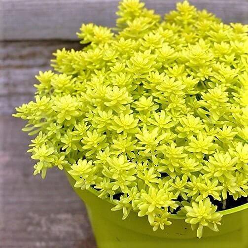 planta para jardim de inverno