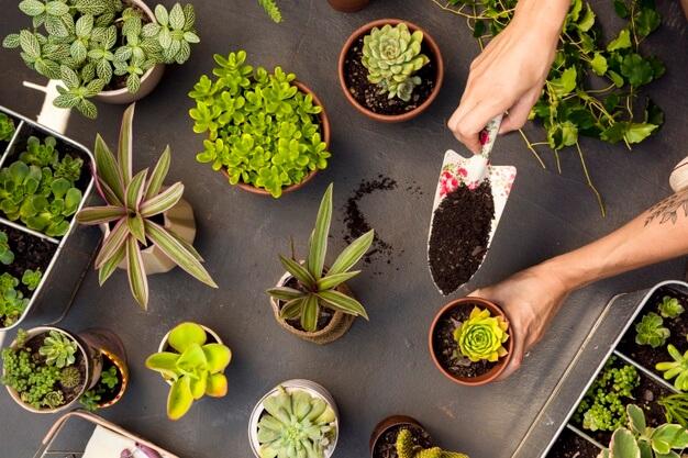 plantas-para-jardim-de-inverno-interno